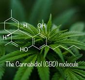 HempWorx CBD Potency